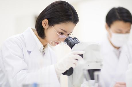 顕微鏡を覗く女性研究員の写真素材 [FYI02967731]