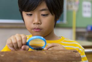 クワガタを観察している男の子の写真素材 [FYI02968879]