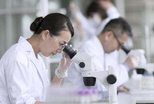 顕微鏡を使って研究をしている女性研究員の写真素材 [FYI02970270]