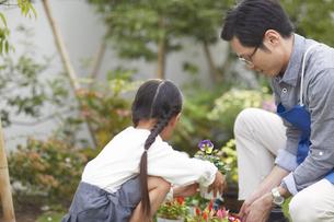 庭に花を飾る父と娘の写真素材 [FYI02970852]