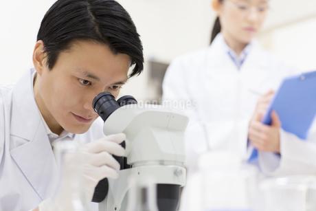 顕微鏡を覗く男性研究員の写真素材 [FYI02971103]