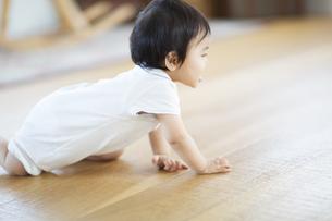 はいはいをする赤ちゃんの横顔の写真素材 [FYI02971838]