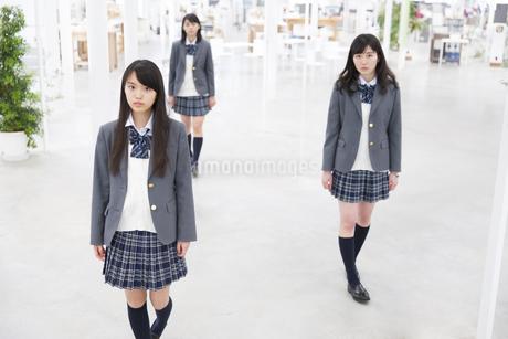女子高校生たちのポートレートの写真素材 [FYI02972108]