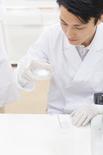 シャーレを使って研究をしている男性研究員の写真素材 [FYI02972232]