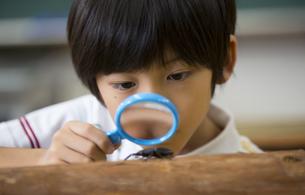 クワガタを観察している男の子の写真素材 [FYI02973229]