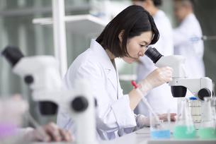 顕微鏡を使って研究をしている女性研究員の写真素材 [FYI02973634]