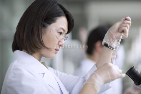 ピペットを使って研究をしている女性研究員の写真素材 [FYI02973944]