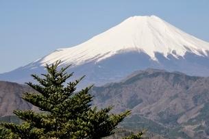 鳥ノ胸山から眺める富士山の写真素材 [FYI02974164]