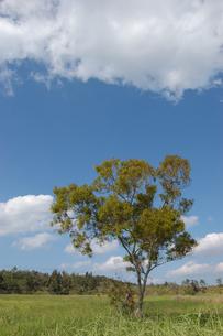 快晴の草原に生える一本の木の写真素材 [FYI02974172]