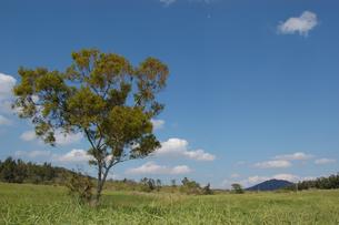 快晴の草原に生える一本の木の写真素材 [FYI02974174]