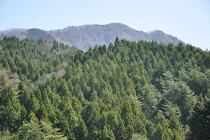 鳥ノ胸山の写真素材 [FYI02974180]