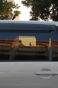 車の窓越しに見える猫の写真素材 [FYI02974205]