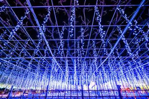 あしかがフラワーパークの大藤 クリスマスイルミネーションの写真素材 [FYI02974261]