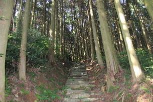森の小道の写真素材 [FYI02974699]