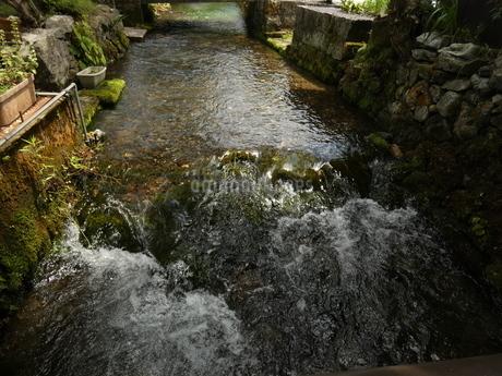 醒ヶ井地蔵川の流れ2の写真素材 [FYI02974979]