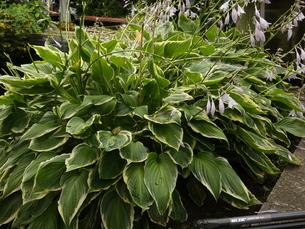 初夏の花・植物の写真素材 [FYI02974981]