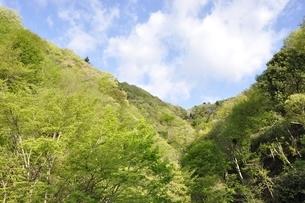 山麓の新緑の写真素材 [FYI02975030]