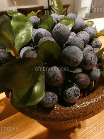 ブドウ科の観葉植物2の写真素材 [FYI02975038]