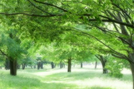 ソフトフォーカスで撮影した緑地(エコイメージ)の写真素材 [FYI02975071]