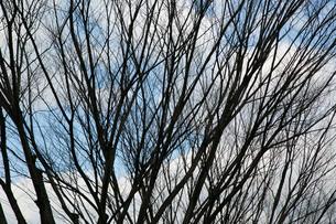 木の枝の写真素材 [FYI02975095]