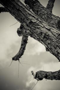 木の幹の写真素材 [FYI02975108]