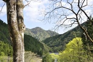 早戸川の自然の写真素材 [FYI02975120]