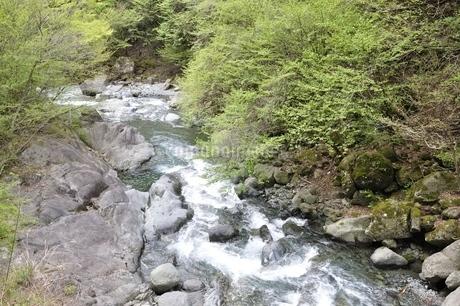 早戸川 新緑の頃の写真素材 [FYI02975124]