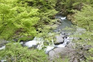 早戸川 新緑の頃の写真素材 [FYI02975129]