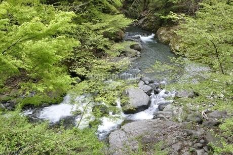 早戸川 新緑の頃の写真素材 [FYI02975131]