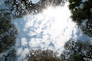 森の中の写真素材 [FYI02975133]