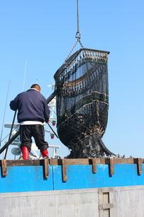 魚の水揚げの写真素材 [FYI02975153]