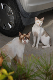可愛い猫とあまり可愛くない猫の写真素材 [FYI02975185]