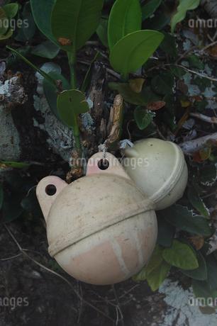 カエルの顔に見える浮き玉の写真素材 [FYI02975188]