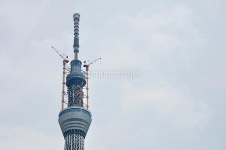 東京スカイツリーの写真素材 [FYI02975450]