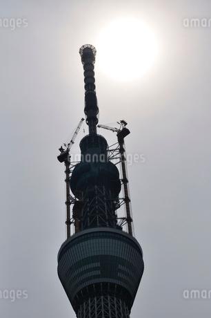 東京スカイツリーと太陽の写真素材 [FYI02975478]