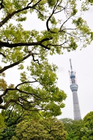 緑と東京スカイツリーの写真素材 [FYI02975480]