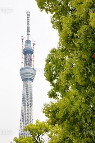 緑と東京スカイツリーの写真素材 [FYI02975481]