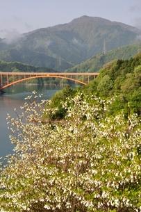 ドウダンツツジ咲く湖畔の写真素材 [FYI02975639]