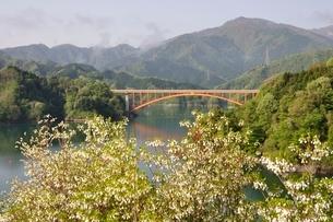 ドウダンツツジ咲く湖畔の写真素材 [FYI02975641]