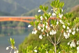 ドウダンツツジ咲く湖畔の写真素材 [FYI02975649]