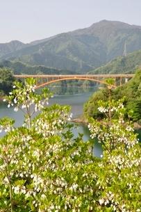 ドウダンツツジ咲く湖畔の写真素材 [FYI02975650]