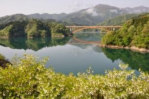 ドウダンツツジ咲く湖畔の写真素材 [FYI02975657]