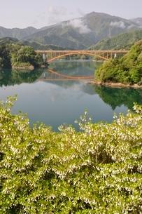 ドウダンツツジ咲く湖畔の写真素材 [FYI02975658]