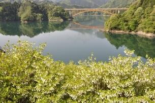 ドウダンツツジ咲く湖畔の写真素材 [FYI02975659]
