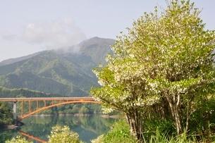 ドウダンツツジ咲く湖畔の写真素材 [FYI02975660]