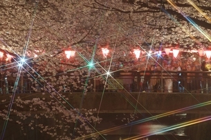 目黒川の桜イメージの写真素材 [FYI02975669]
