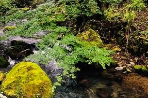 醒井峡谷の写真素材 [FYI02975714]
