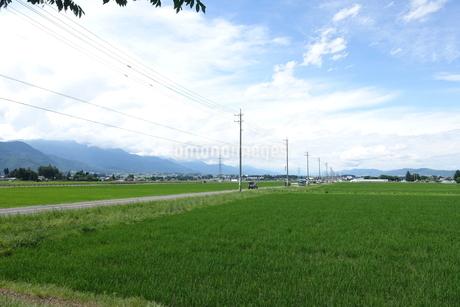 田と道路の写真素材 [FYI02975805]