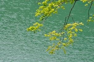 渓谷に映える新緑の写真素材 [FYI02975853]