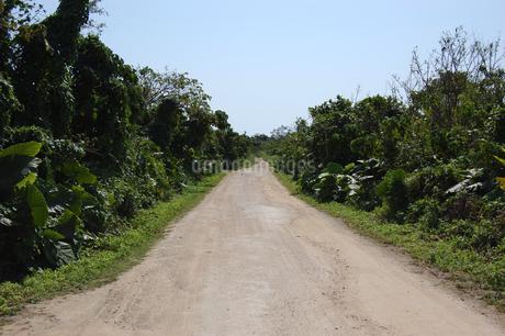 両側が緑の未舗装の白い一本道の写真素材 [FYI02975966]